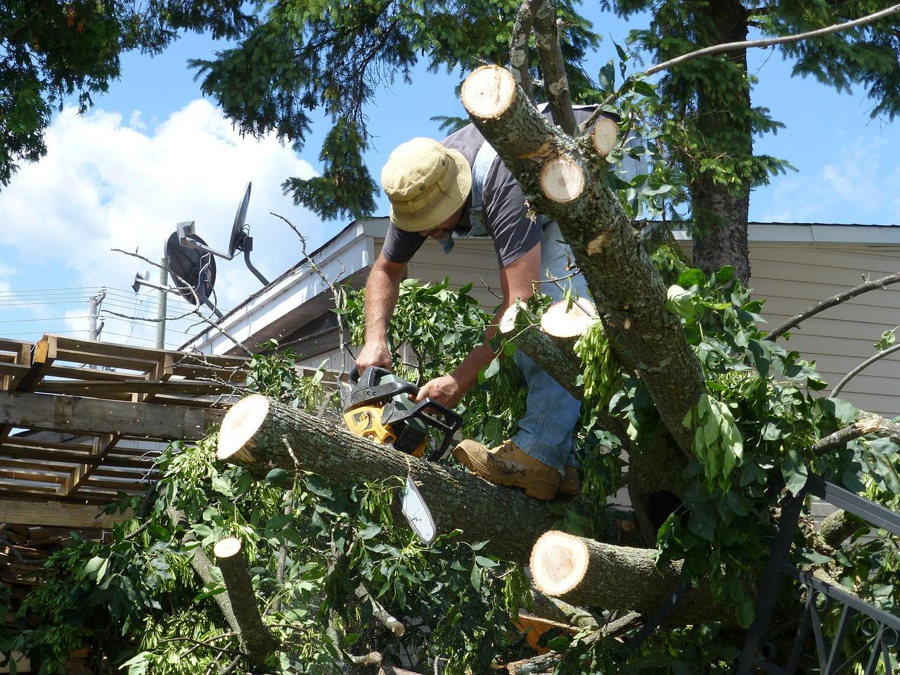 Fallen tree 2015 richard montgomery spiritdancerdesigns Gallery